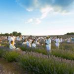Festival de la lavanda de Brihuega: qué es, dónde y cuándo se celebra