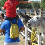 Burrolandia: mañanas de domingo con burros protegidos