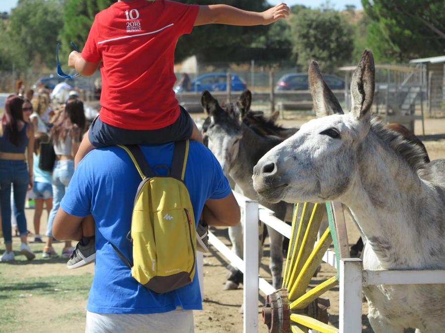 Burrolandia es el paraíso de los burros