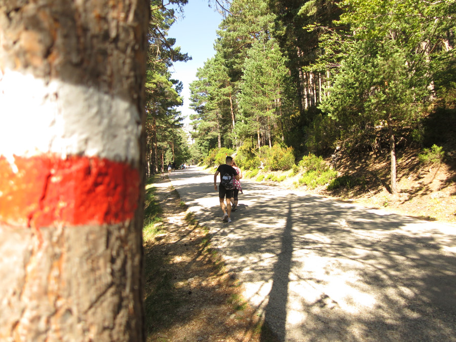 El camino hasta la Laguna Negra es una preciosa ruta entre árboles