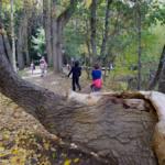 El Bosque Finlandés de Rascafría: un paseo misterioso