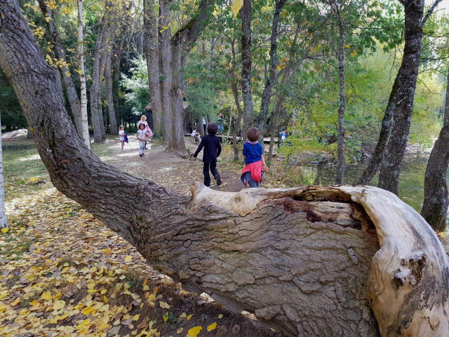 Ruta por el bosque finlandés de Rascafría, Madrid