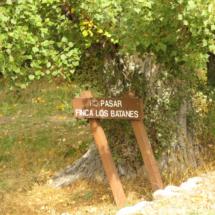 Bosque finlandés de Rascafría