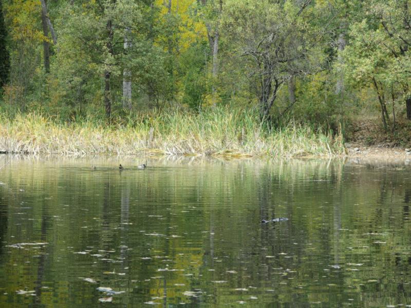 Entorno del bosque finlandés de Rascafría