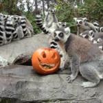 Faunia celebra Halloween