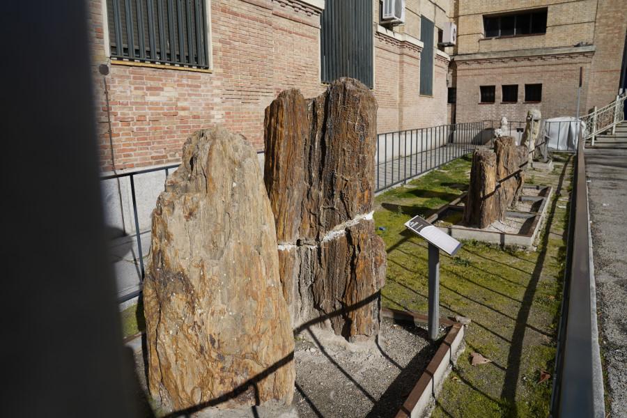 Árboles de piedra