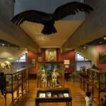 Museo de Ciencias Naturales de Madrid: guía para divertirte con niños