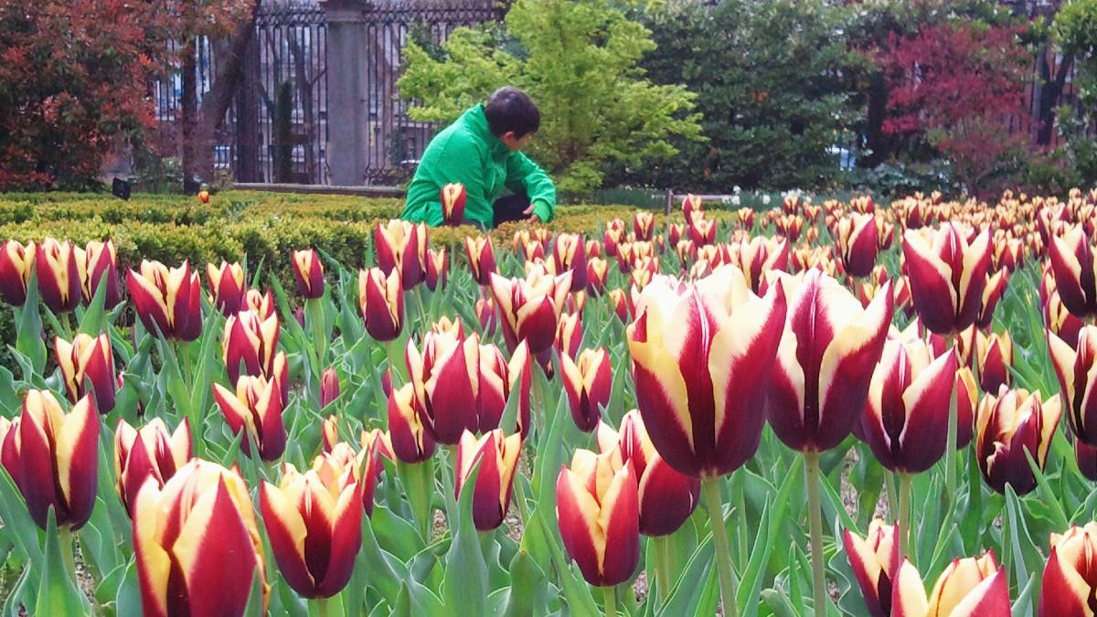 Flores en el Real Jardín Botánico, en Madrid