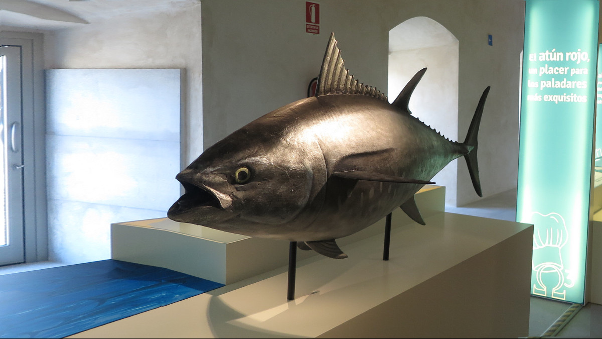 Visitamos el Museo del Atún de Conil de la Frontera, en Cádiz