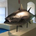 Visitamos el Museo del Atún de Almadraba 'La Chanca'