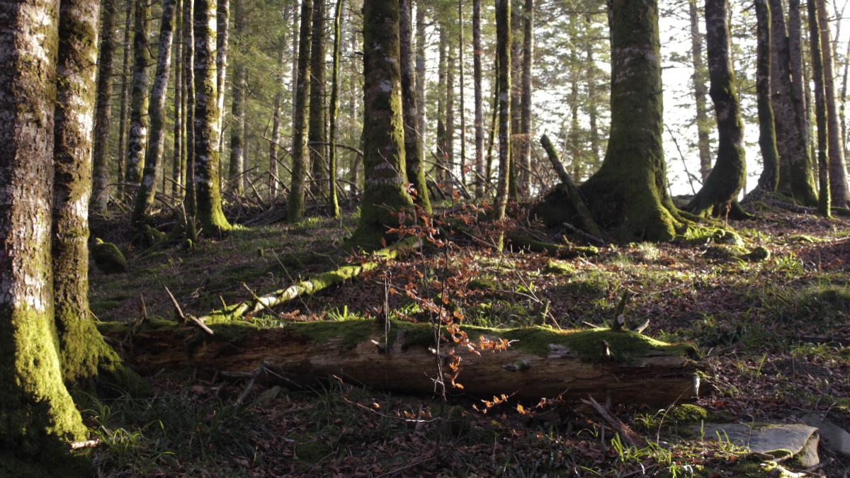 Consejos para tu ruta por el Bosque de Irati