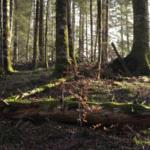 Consejos para disfrutar de la Selva de Irati