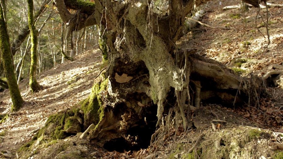 Repasamos la Historia y las leyendas del Bosque de Irati