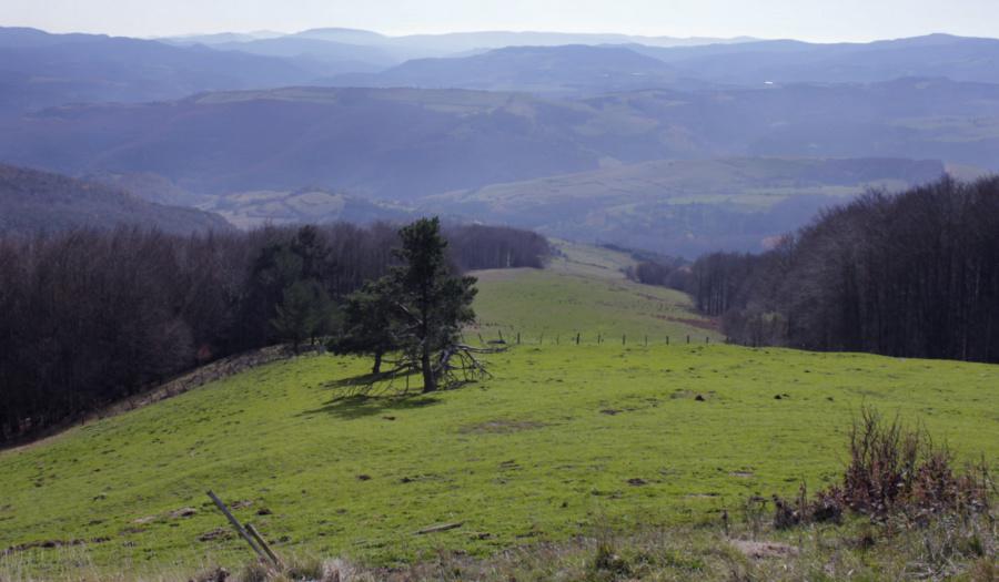 Entorno del Bosque o Selva de Irati, en Navarra