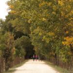 5 espacios naturales para visitar en otoño