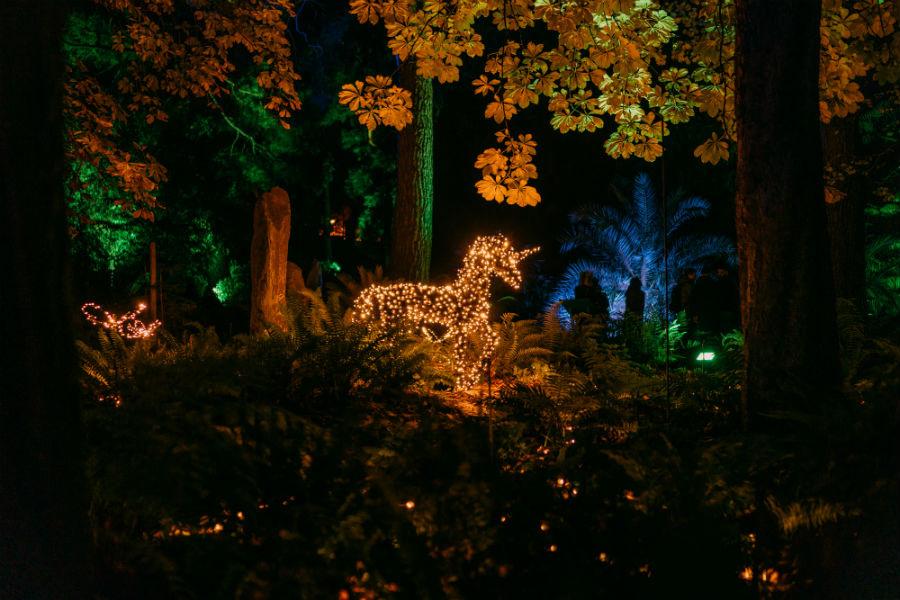 Las Luces del Real Jardín Botánico - Plaza de la Alegria ©Christmas Garden
