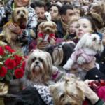 Fiestas de San Antón: plan con niños y sus animales de compañía