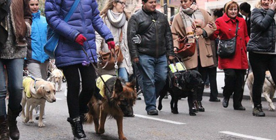 Procesión de San Antón con perros guía