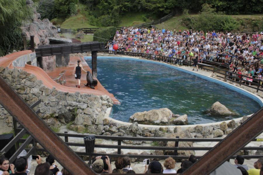 Exhibición de leones marinos en el Parque de Cabárceno