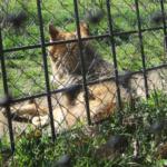 La Cañada Real, centro de fauna ibérica en Peralejo, cierra sus puertas