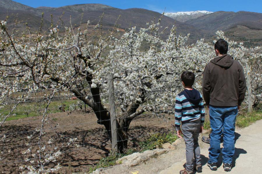 Ver cerezos en flor en el Valle del Jerte es el plan más típico de la primavera en Cáceres
