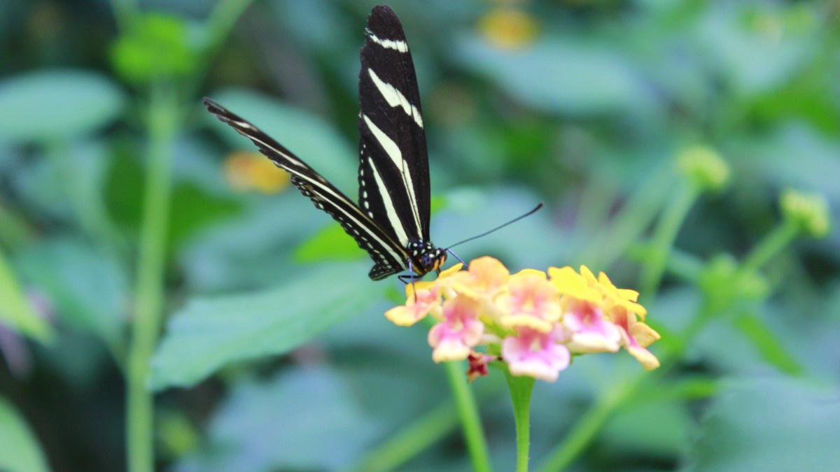 Mariposa sobre una flor en primavera