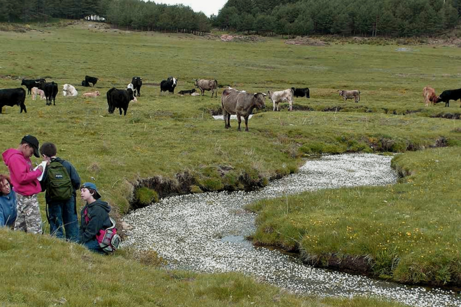 Las excrusiones al campo son una actividad clásica en los campamentos de verano infantiles...
