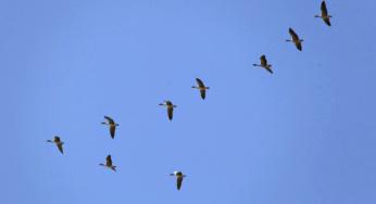 Actividades con aves para hacer en familia