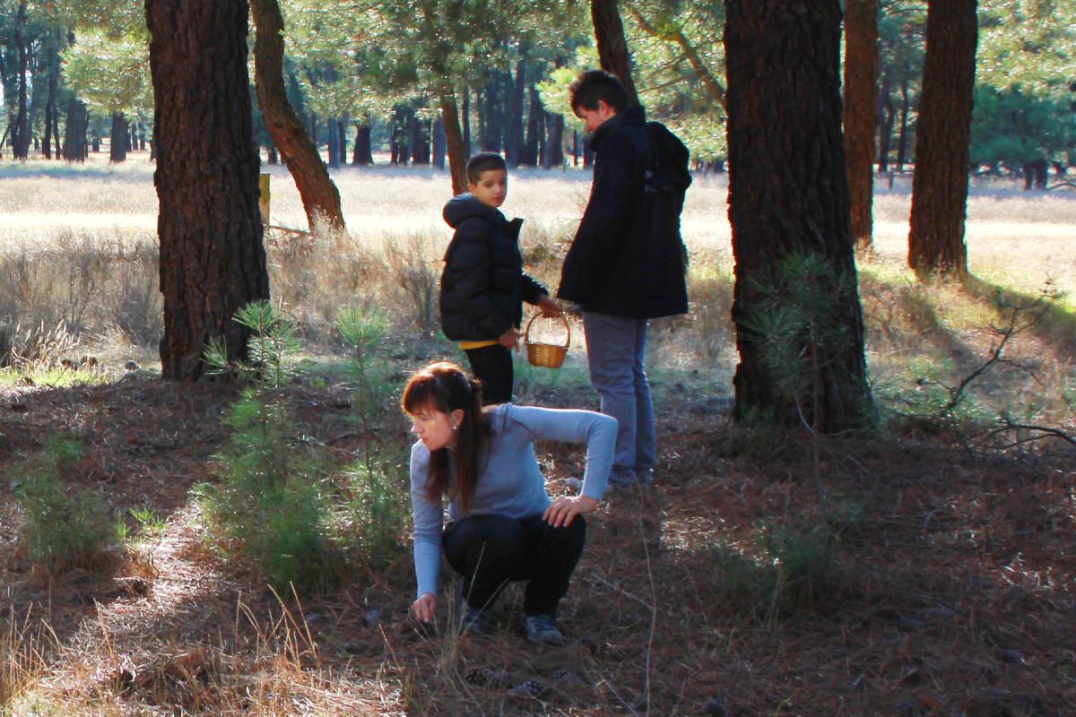 Cómo planear una excursión para recolectar setas con peques