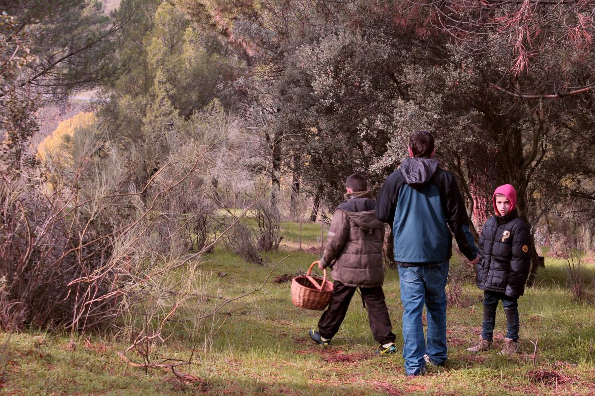 Te contamos cuáles son nuestros sitios 'secretos' para ir a buscar níscalos cerca de Madrid