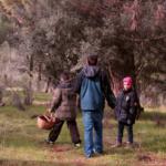 3 sitios para recoger níscalos y setas cerca de Madrid