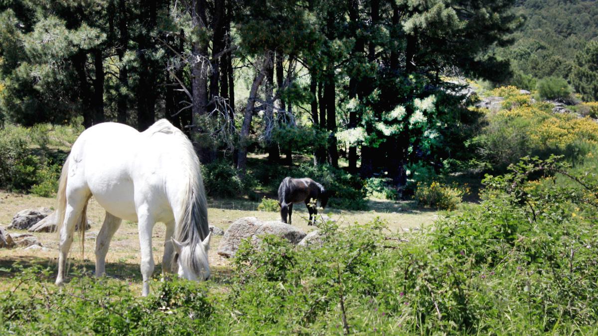 Planes de Naturaleza para la Semana Santa en Madrid