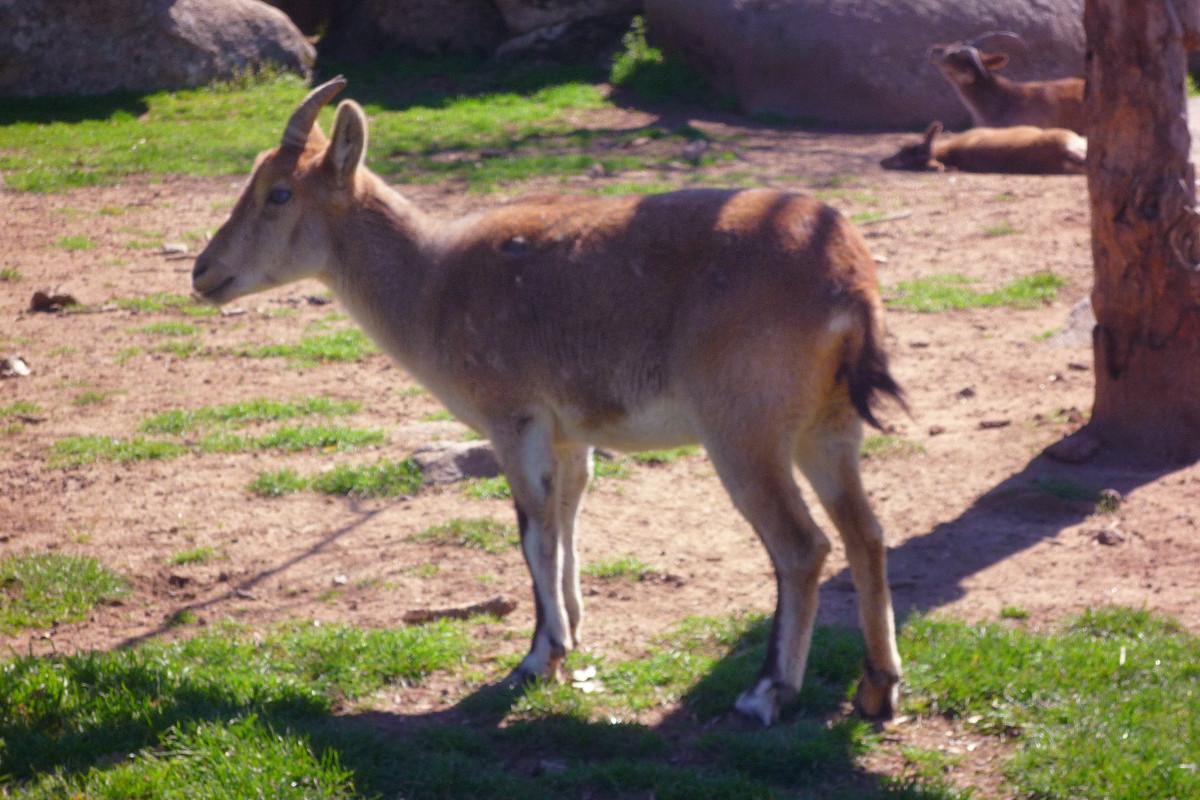 Una reserva de animales o un gran zoo son excursiones ideales para un día primaveral